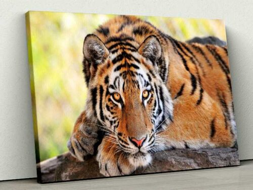 Tablou Canvas Young Tiger