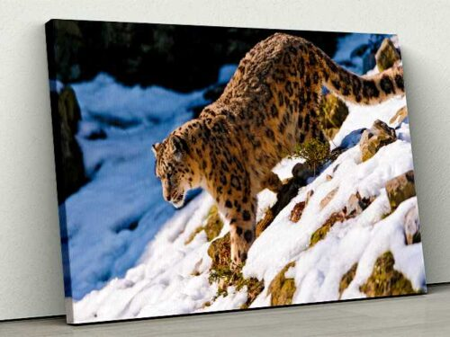 Tablou Canvas Leopard Walking Down