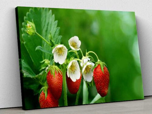 Tablou Canvas Strawberry Flowers And Fruits